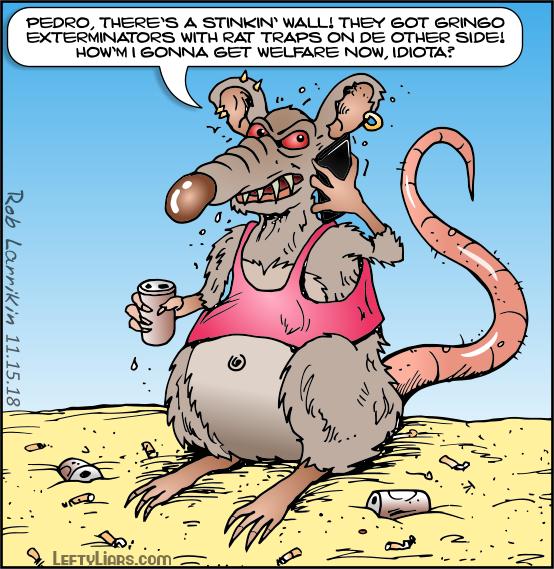 Migrant rat feels cheated