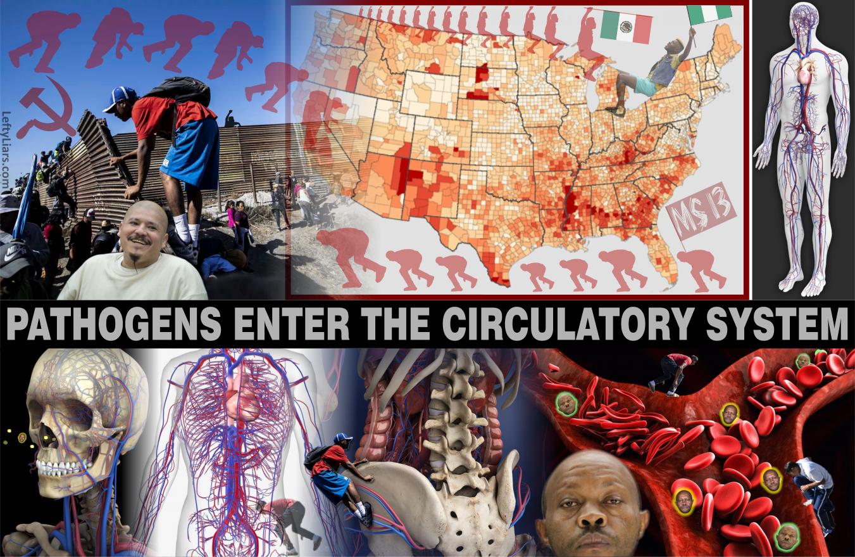 Pathogens Illegal Immigrant Invaders.